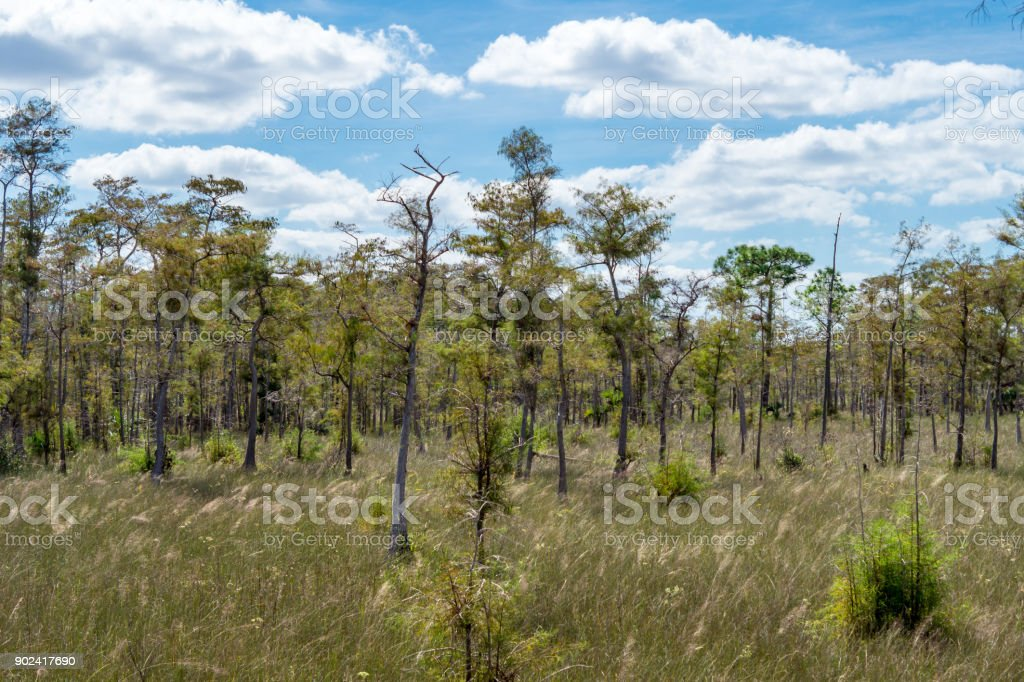 Grass Land In Everglades National Park Florida Usa Stock Photo