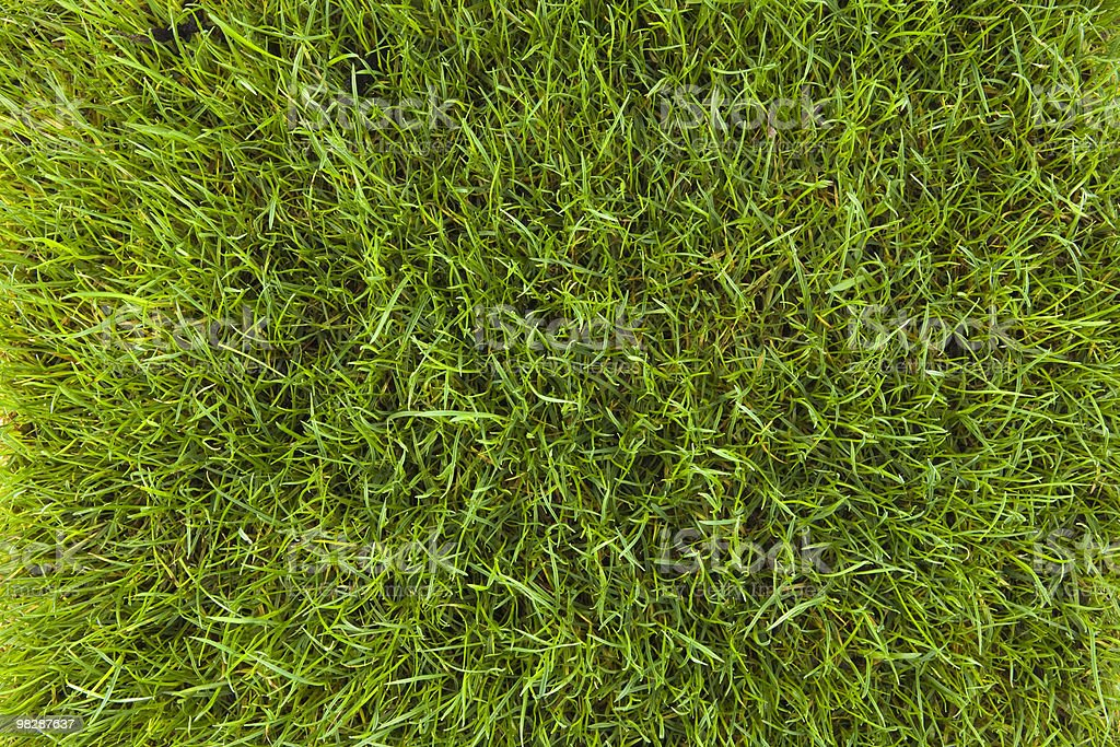 grass lawn, background texture royalty-free stock photo