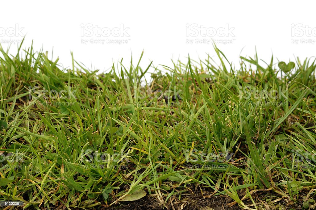 Grass lawn close up with white top royalty-free stock photo
