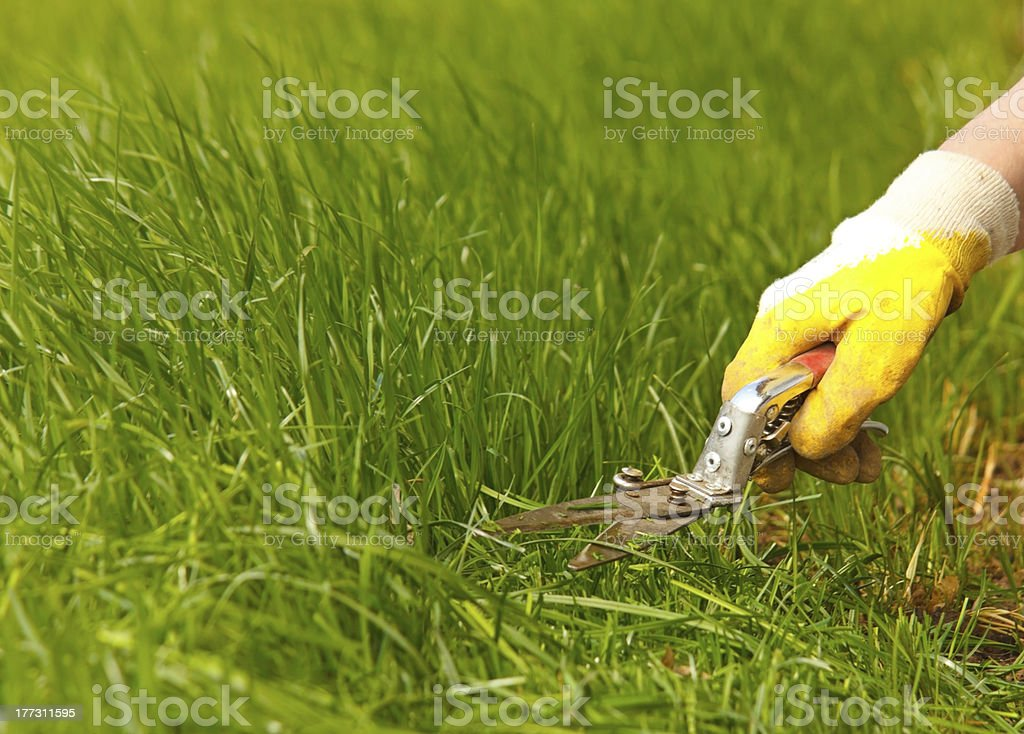Grass lawn trimming, garden shear and yellow glove royalty-free stock photo