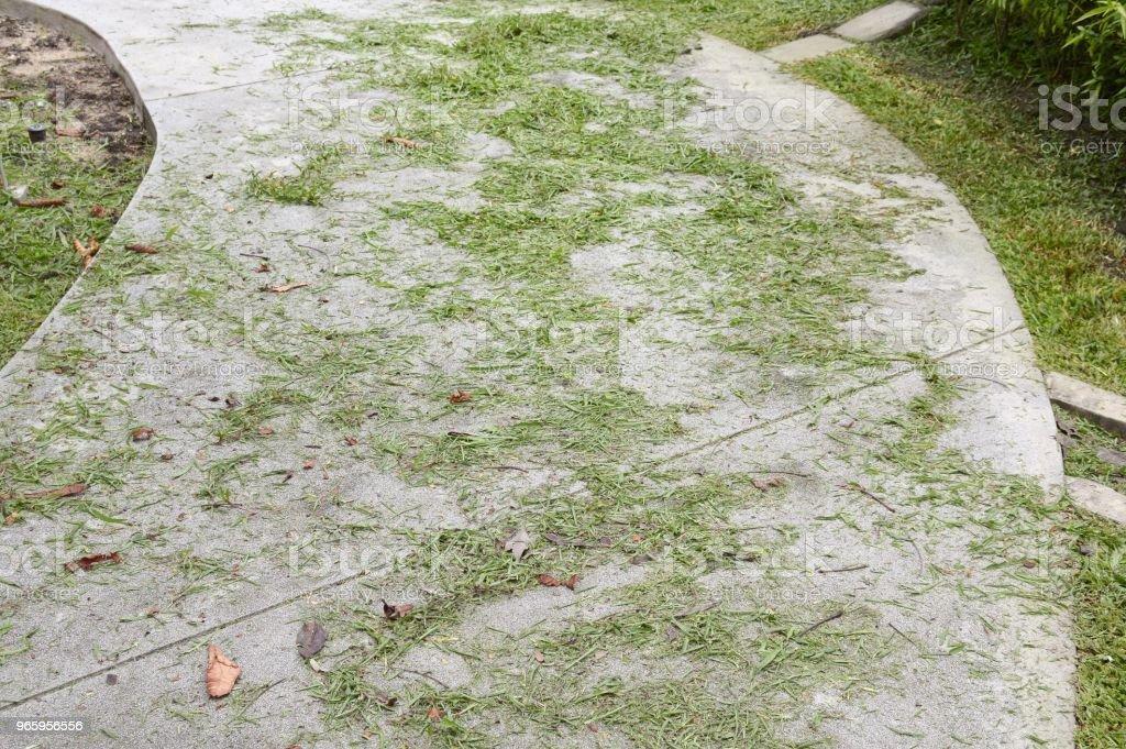 gras verlaat op cement vloer - Royalty-free Blad Stockfoto