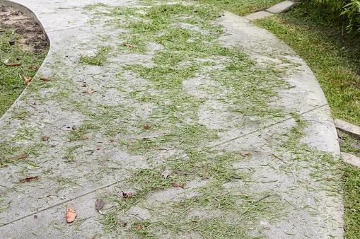 Gras Verlaat Op Cement Vloer Stockfoto en meer beelden van Blad