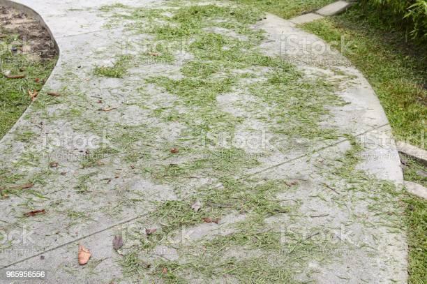 Grass Lässt Auf Zementfußboden Stockfoto und mehr Bilder von Blatt - Pflanzenbestandteile