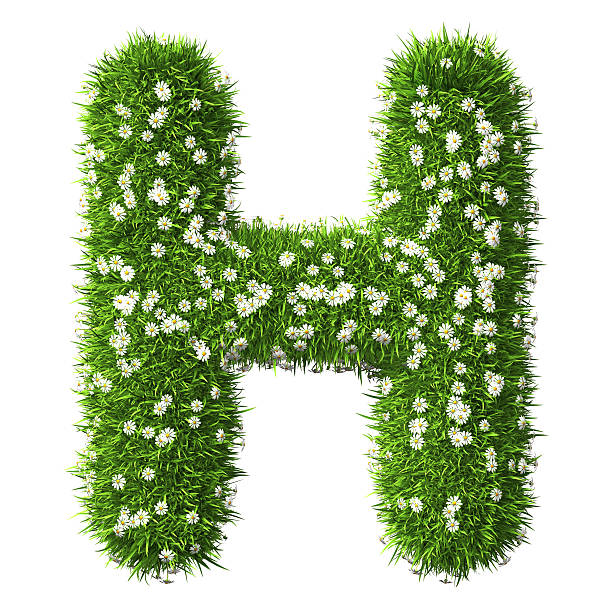 2e5bb1b73d Best Green Grass Letter H Stock Photos, Pictures & Royalty-Free ...