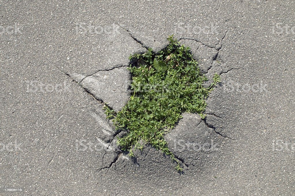 grass making its way through a crack of asphalt royalty-free stock photo