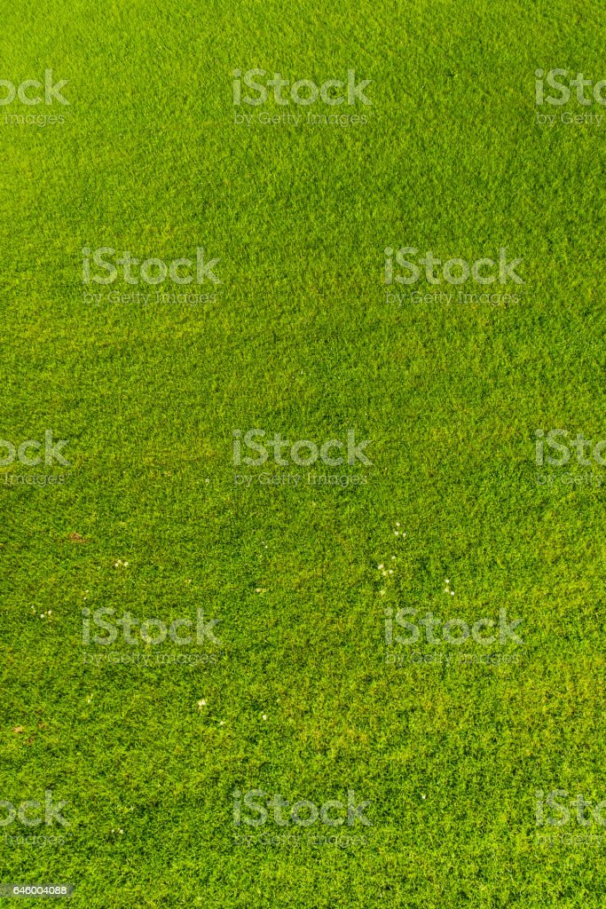 Grass meadow background green pasture field aerial view stock photo