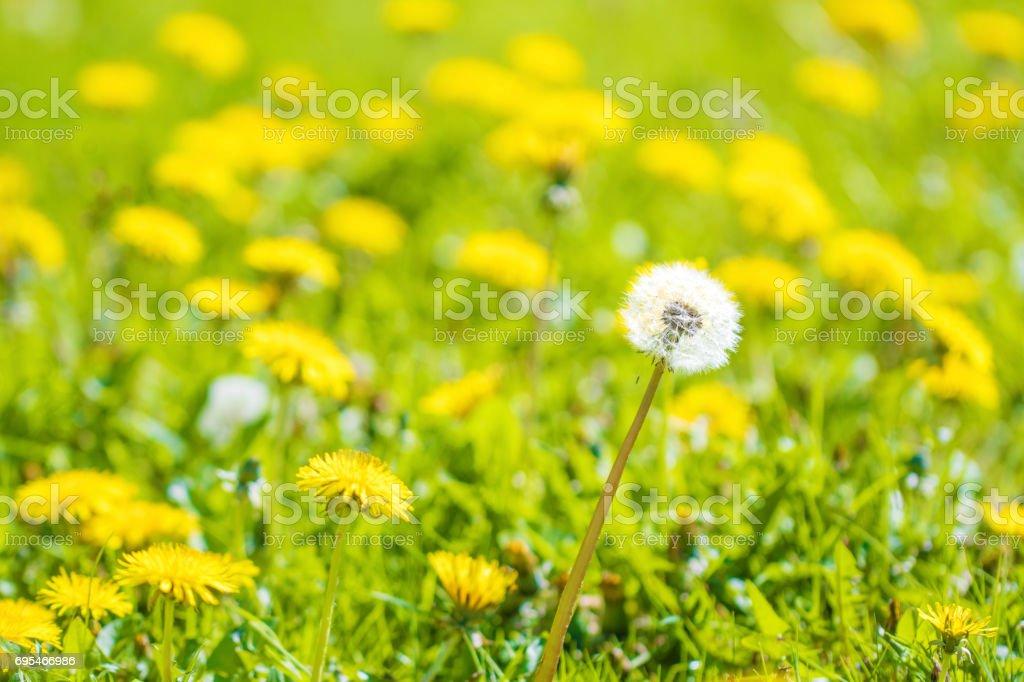Herbe de Prairie - Photo