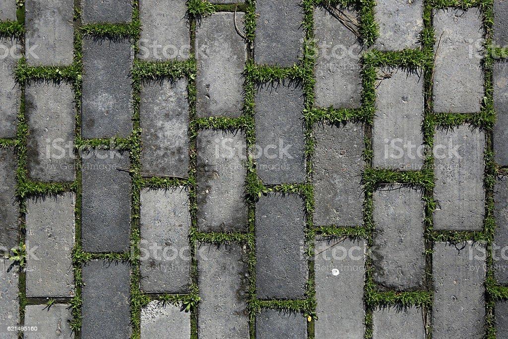 Grass midst pavement photo libre de droits