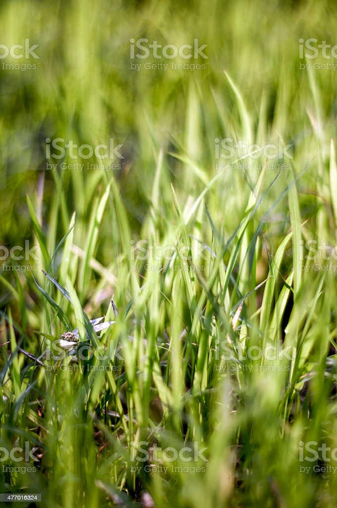grass natural backgrounds with beauty bokeh (focus soft stock photo