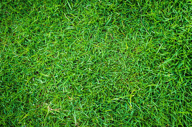 grass of natural background stock photo