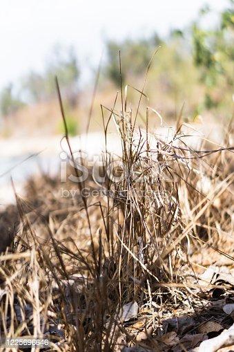 istock grass on a beach 1225696646