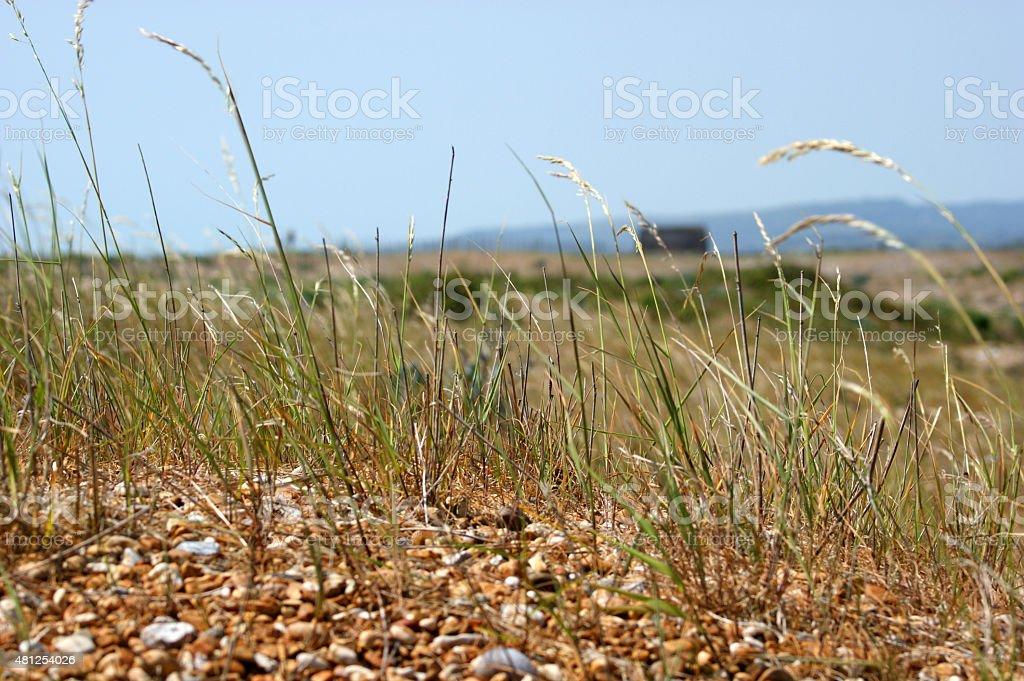 Grass on a Beach stock photo