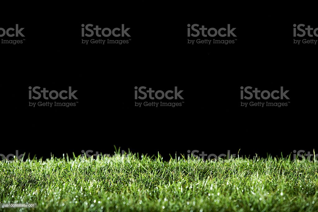 Grass on black background royalty-free stock photo