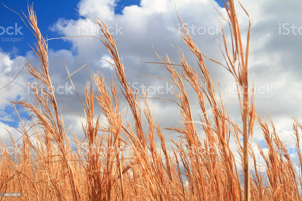 Grass on Clouds royalty-free stock photo