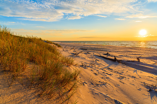 Grass on sand dunes at sunset time on a beach in Leba, Baltic Sea, Poland