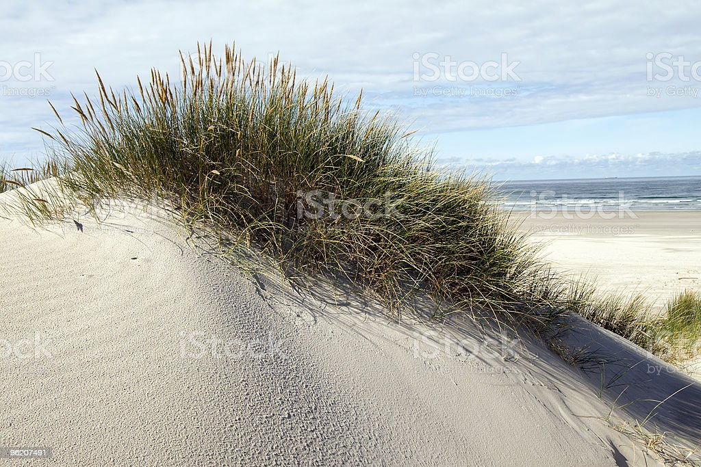 Grass on sand dunes with beach and sea in background royalty-free stock photo