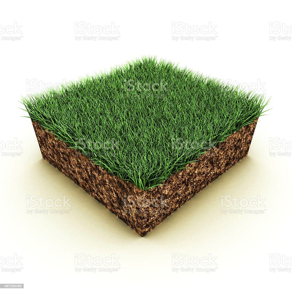 grass on soil stock photo