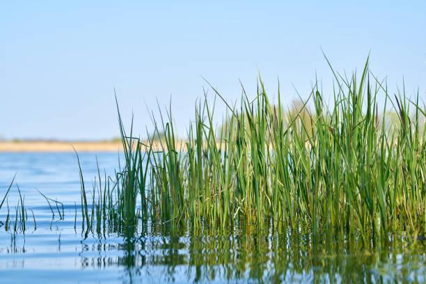 Gras am Ufer eines Sees – Foto