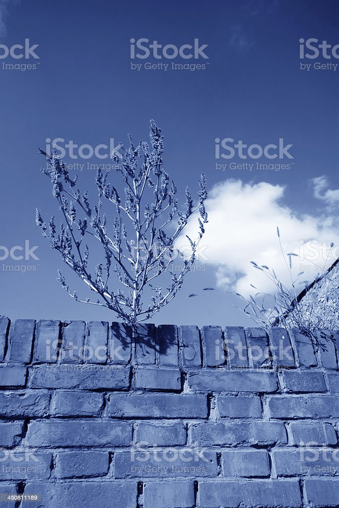 grass on the wall under blue sky royalty-free stock photo