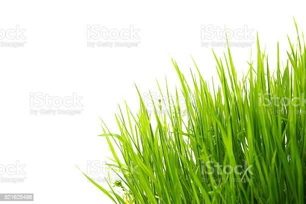 Gras Auf Weiß Stockfoto und mehr Bilder von Blatt - Pflanzenbestandteile