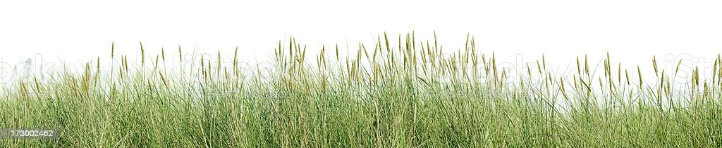 Grass panorama isolated on white. stock photo