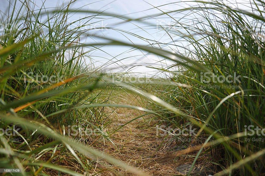Gras Weg – Foto