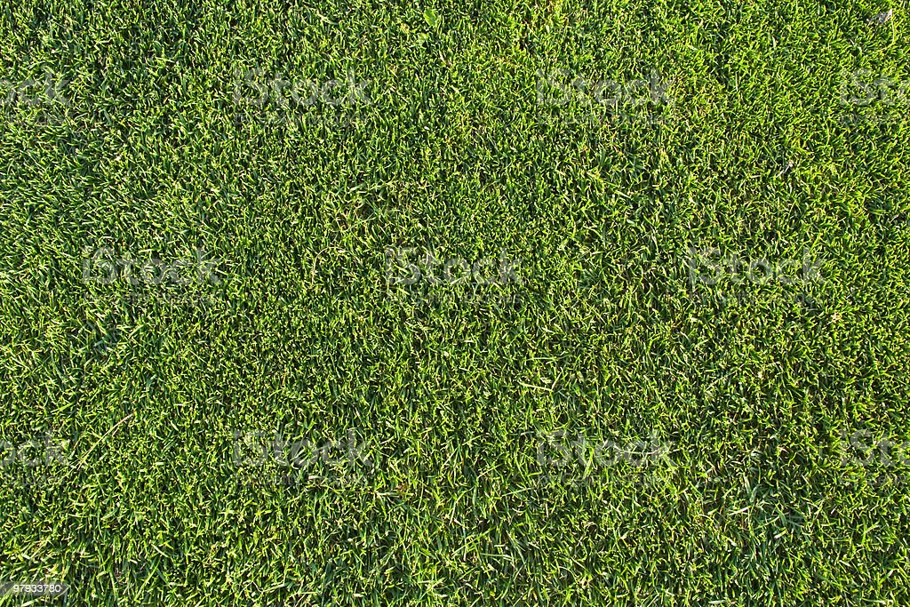 Grass pattern royalty-free stock photo