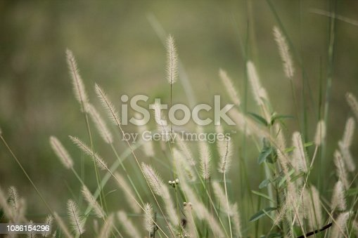 istock grass 1086154296