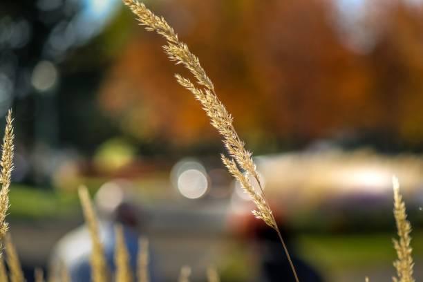 herbe - josianne toubeix photos et images de collection