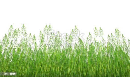 grass isolated side view