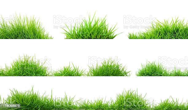 Grass picture id178068975?b=1&k=6&m=178068975&s=612x612&h=ppjtdpj1cvg0o0z3j6x bu2vhh6lmeasmmfwu7wtcfs=