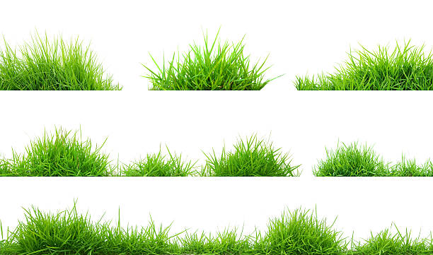 grama - gramado terra cultivada - fotografias e filmes do acervo