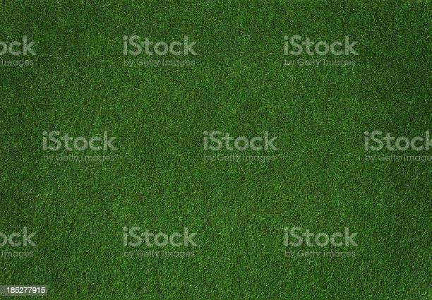 Photo of Grass