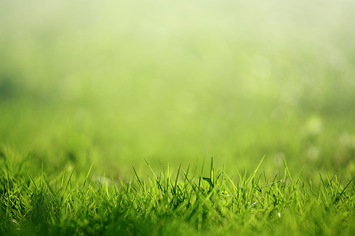 Close-up of fresh grass on the field, selective focus.
