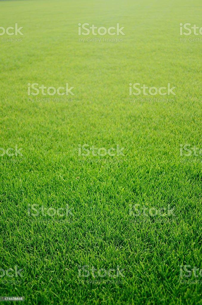 Grass – zdjęcie