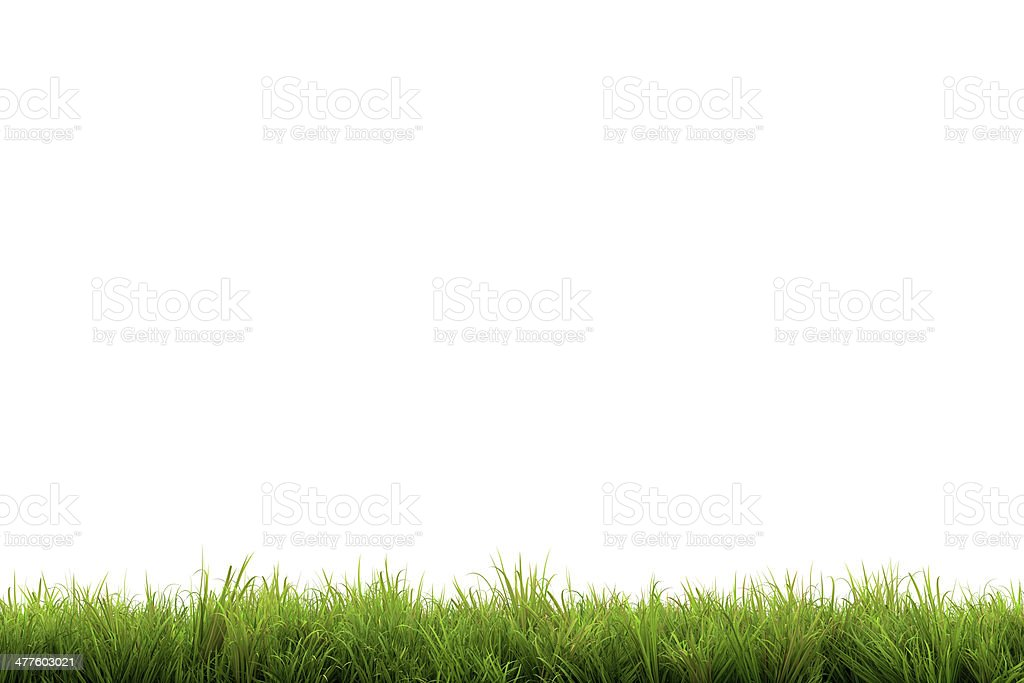 Grass stock photo
