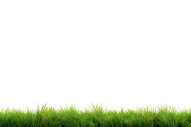 erba - filo d'erba foto e immagini stock