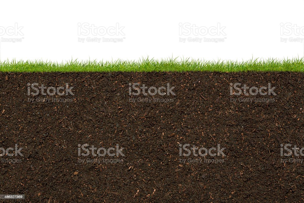 Grass - Royalty-free Cross Section Stock Photo