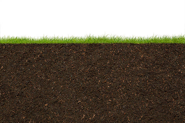 Grass Grass and soil. underground stock pictures, royalty-free photos & images