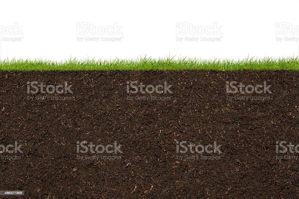 Gras – Foto