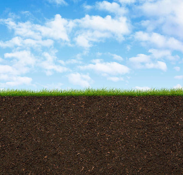 grass - dirt stock photos and pictures