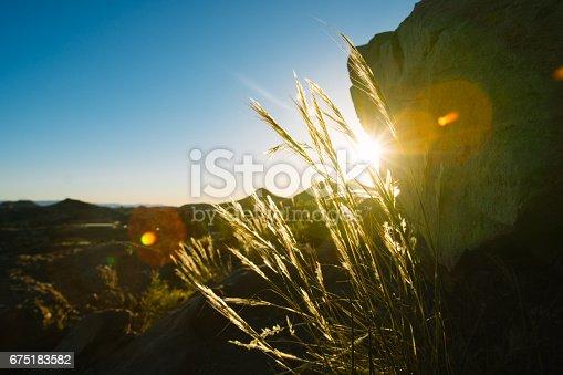 Sun in grass.