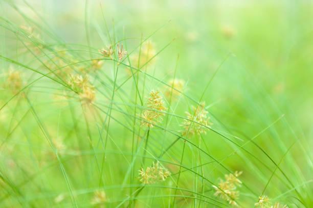 草ます。 ストックフォト