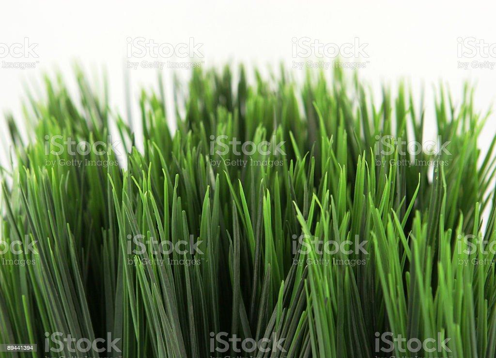 Grass zbiór zdjęć royalty-free