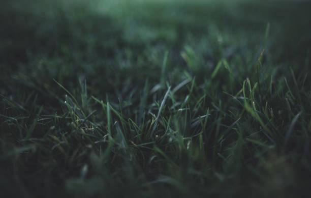 Grass – Foto