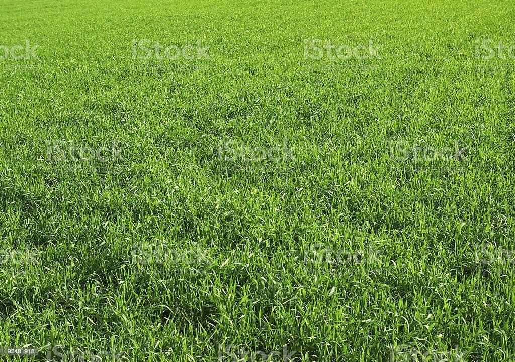 잔디 - 로열티 프리 0명 스톡 사진