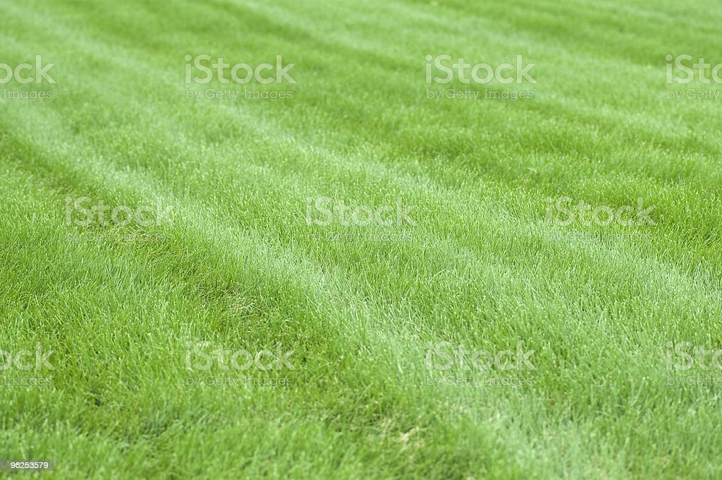 Grass - Royalty-free Abstract Stock Photo