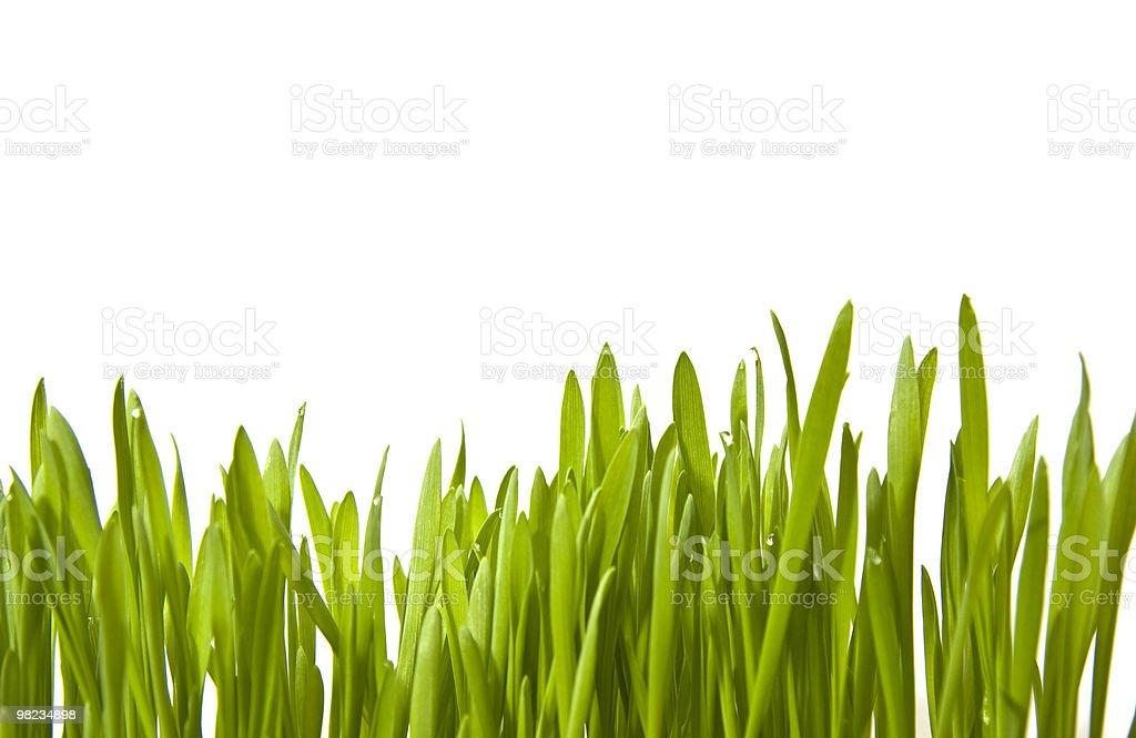 잔디 royalty-free 스톡 사진