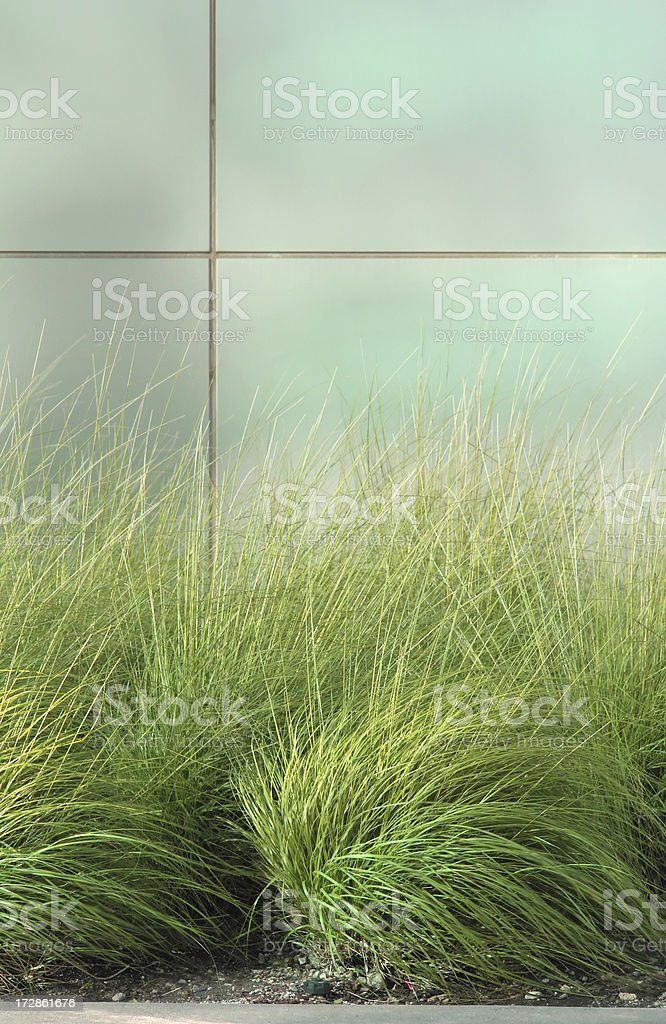 Grass plant in front of modern building. royalty-free stock photo