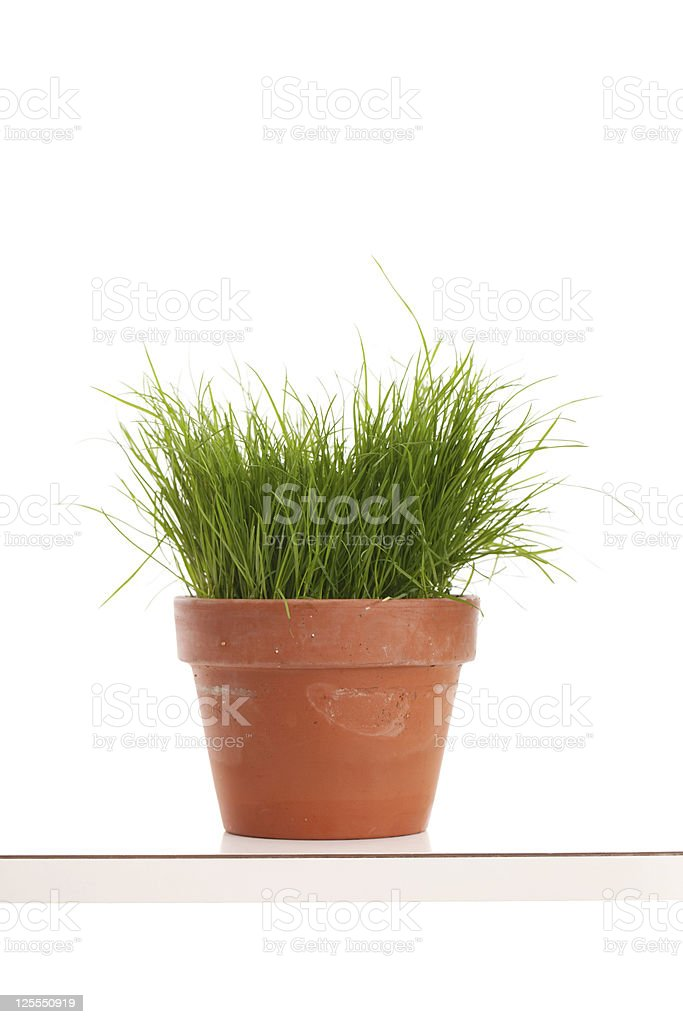 Grass Plant on the Table royalty-free stock photo